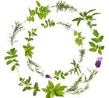 Zioła - jak leczyć się ziołami?