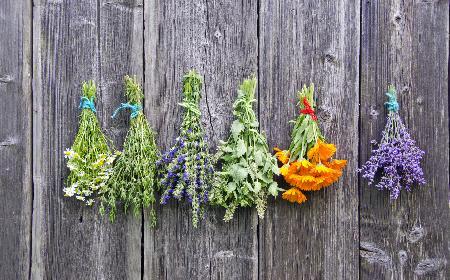 Czy zioła można przedawkować?